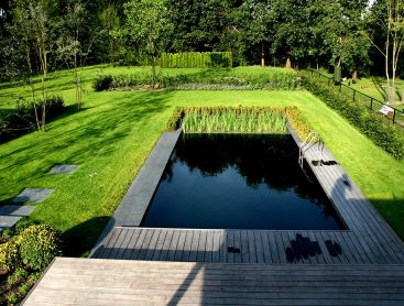 Living Pool in the Netherlands Featuring Clean Design
