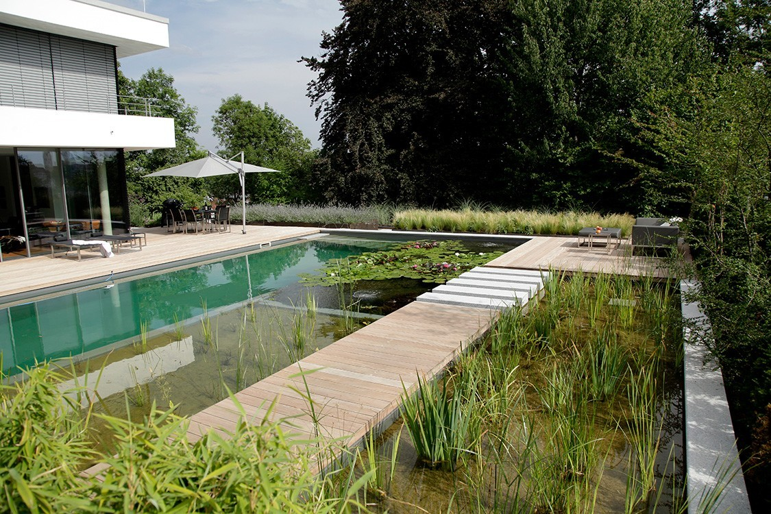 natural pool in Germany in reflecting pool style