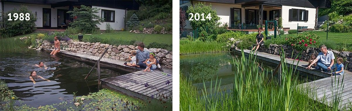The BIOTOP Natural Pool Renovation and Retrofitting