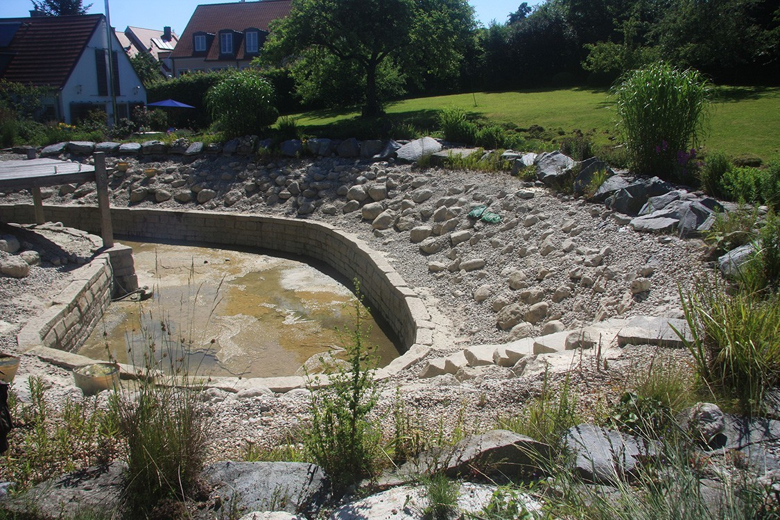 natural pool renovation in germany