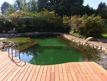 revival-of-a-natural-pool